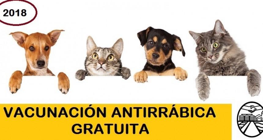 En mayo se inicia la campaña de vacunación antirrábica
