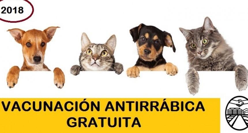 El Municipio vacunó más de 200 animales en lo que va de la campaña antirrábica gratuita