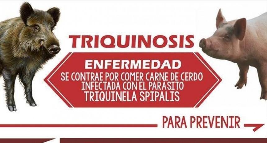 Ayudemos a prevenir la triquinosis