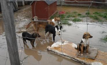 ¿Cómo sería una vida de perros?