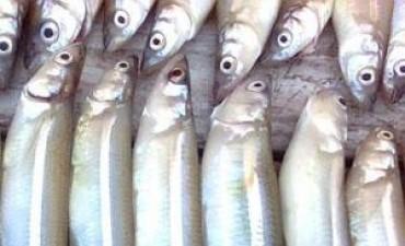 """Polémica por la pesca indiscriminada de pejerrey en """"Barrancas"""""""
