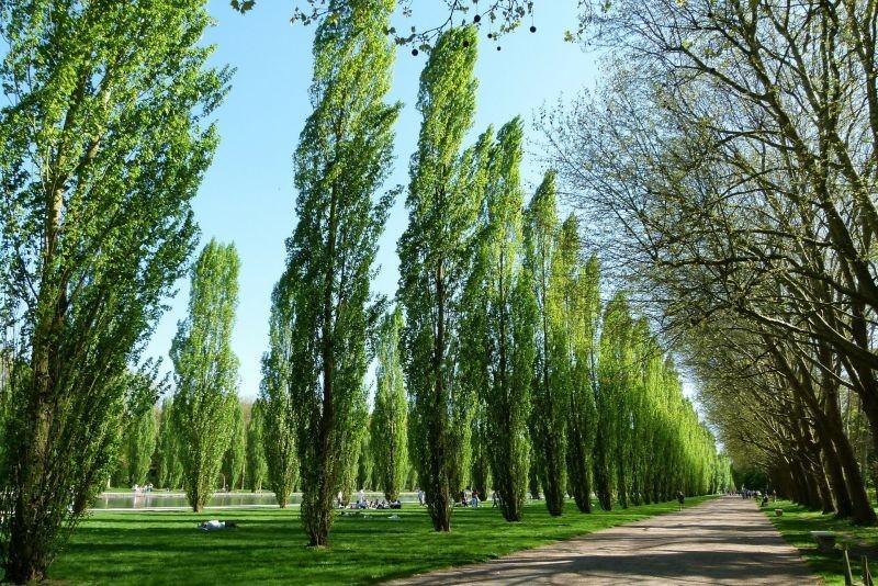 Plan Forestal 2021